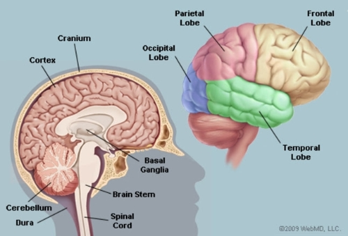 Brain Therapy for Acute Dizziness, Headache and Disorientation